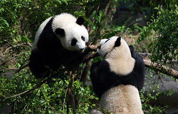 8 Days Panda & Silk Road Tour