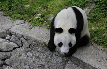 The Giant Panda Valley