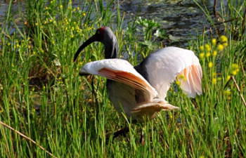 The Crested Ibis Nature Reserve