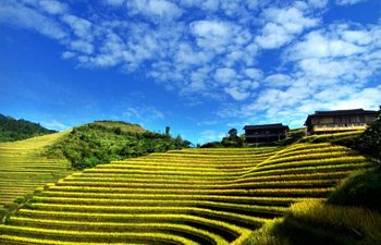 One Day Longsheng Terraced Field Tour