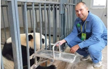 One Day Private Chengdu Panda Volunteering Tour from Xian by High Speed Train