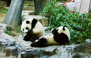 4 Days Chengdu Discovery Tour