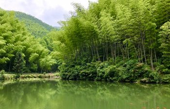 Huangshan Private Day Tour: Hongcun Village+Mukeng Bamboo Forest