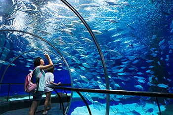 3 Days Shanghai Family Tour with Shanghai Ocean Aquarium