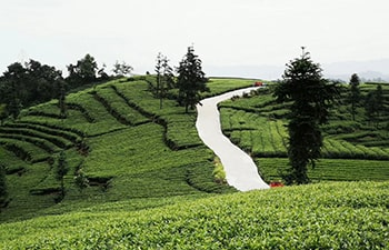 2 Days Chengdu Private Tour with Mt. Mengding Tea Culture Experience