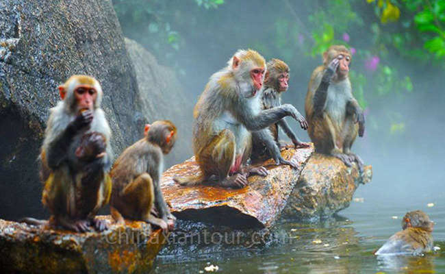 One Day Monkey Island and Nantian Hot Spring Tour