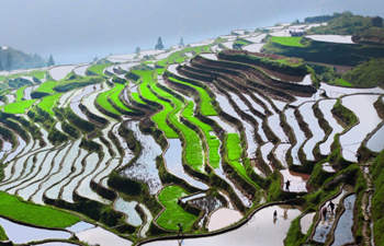 One Day Longji Terrace Field Bus Tour